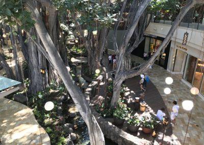 The new International Marketplace kept the historic banyan tree